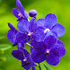 orchids wallpaper by best wallpaper inc