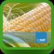 BASF México-Cultivo del Maíz by PreTech