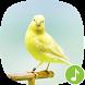 Appp.io - Canary Bird Sounds by Appp.io