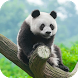 Panda Wallpapers by Dabster Software Solution