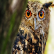 Owl Wallpapers by sangam