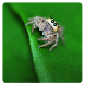 Dangy Spiders logic game by Sergey Vasunenkov