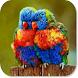 Birds HD Wallpapers by HD Wallpaper Developers
