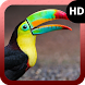 Tucan Wallpaper by MaxImages