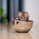 Cute Kitten Wallpapers HD by wallpaperhd