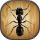 Insect Smasher Ant Killer game by KIDS GAMES