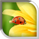 Ladybug Live Wallpaper by POP TOOLS