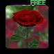 3D Rose Live Wallpaper Free by Oleksandr Popov