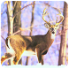 Deer Frontline Shooter 2016 by 786 Gaming Studio