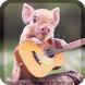 Little Pig Live Wallpaper by WallpapersLove