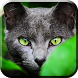Cat Relax Live Wallpaper by BAMBULKA Developer