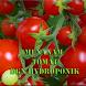 Tanam Tomat Dengan Hidroponik by GoReading