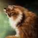 Brown Cat Live Wallpaper by Daksh Apps