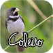 Canto de Coleiro by Mediaku Apps