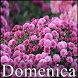 Domenica by fheihet apps