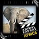 Best African Animals Sound by Netigen