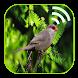 تغريد طائر الحسون بدون نت by geekboom