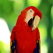 Parrots Wallpapers by sangam