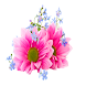 Widgets store: Flower-5 by K&D Lab