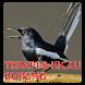 Terapi Burung Kicau Lengkap by One Eyes Corp