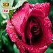 Flower Wallpapers HD by HD 4K Wallpapers
