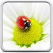 Ladybug Live Wallpaper by Creative Factory Wallpapers