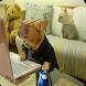 Fotos de animais engraçados by Entertainment LTD Apps