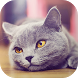 Cats Wallpapers 2017 by Tamaris Labs
