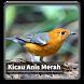 Kicau Suara Burung Anis Merah by kangdeveloperstudio