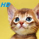 kitten wallpapers HD free special for you by funnylab