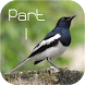 Bird Species Voice Library #1 by Visualicious Publisher
