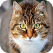 Cat Breeds by Best Free Apps Mobile
