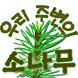 우리 주변의 소나무 by Sang Heon Kim