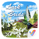 Lark Birds 3D V Launcher Theme by V Launcher