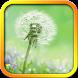 Dandelion Live Wallpaper by November Apps
