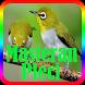 Kicau Master Burung Pleci Offline by Suto App