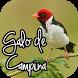 Canto de Galo de Campina by Mediaku Apps