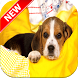Beagle Wallpapers by Fresh Wallpapers