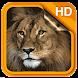 Silent Lion Live Wallpaper