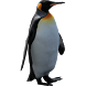 Funny Penguin Widget/Stickers by Miracle (HD Widgets)