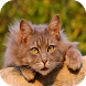 Cat Training Tips And Tricks by Best Free Apps Mobile