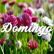 Mensajes de Domingo by Ninja Express