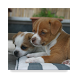 100+ Dogs Wallpaper by KJSK Developers