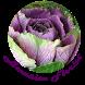 Brassica Florist by successway