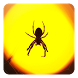 Spider Live Wallpaper by Dynamic Live Wallpapers