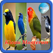 Masteran Kicau Burung NEW by Yayane Apps