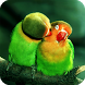 Parrot Bird Live Wallpaper by Empire Wallpapers