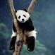 Cute Panda Wallpapers HD by wallpaperhd