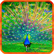 Peacocks Live Wallpapers by 3D Top Live Wallpaper