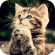 Cat Wallpapers HD by PikasApps